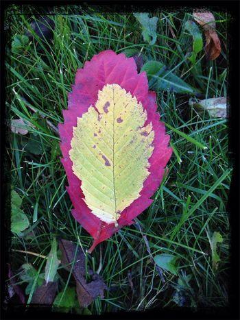Autumn colours. Autumn Fall Colors Beautiful Nature