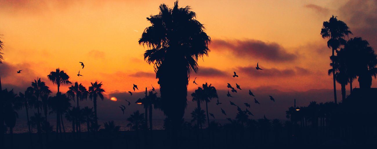 What Does Freedom Mean To You? Venice Beach Hotel Room View