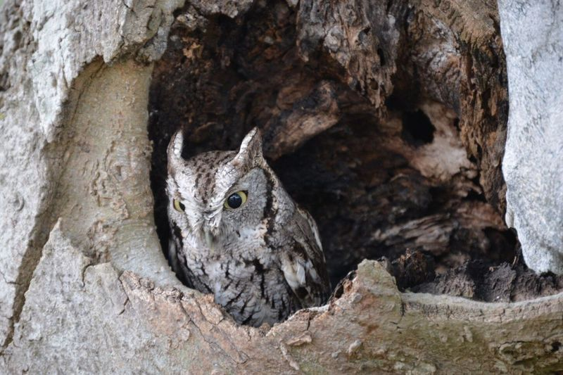 Owl Wildlife