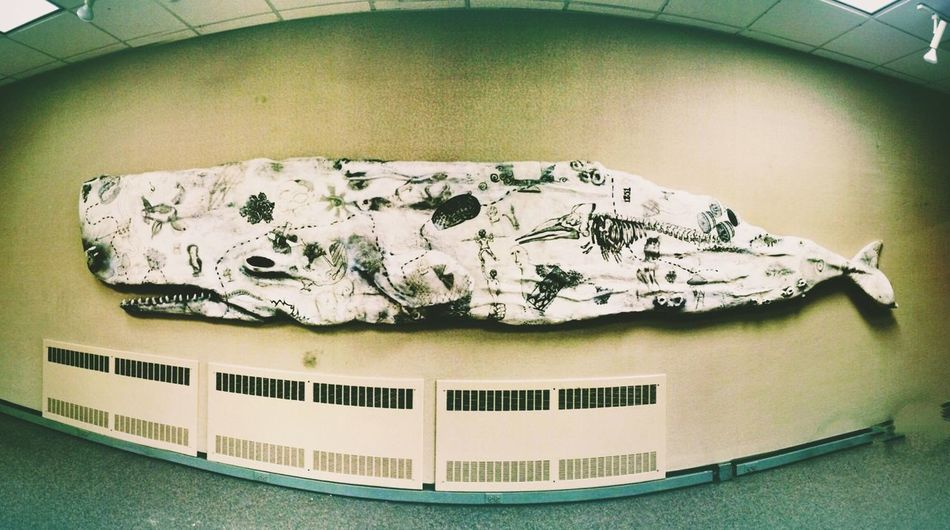 The Painted Whale Whale Moby Dick Students Your Art Is Portable With Caseable