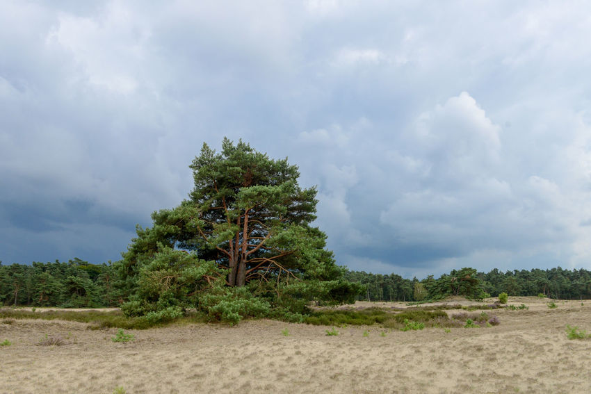Tafelberg hiking route in Hulshorst the Netherlands Hulshorst Netherlands The Netherlands Beauty In Nature Cloud - Sky Day Drifting Sand Hiking Trail Holland Landscape Nature No People Outdoors Sand Scenics Sky Tafelberg Tranquil Scene Tranquility Tree