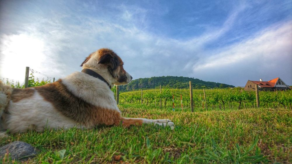 Wine Balaton - Hungary Badacsony Badacsonytomaj