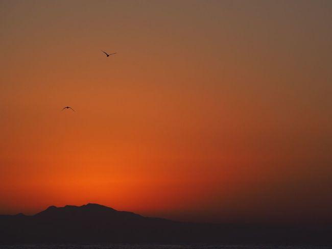 After Dark Sunset #sun #clouds #skylovers #sky #nature #beautifulinnature #naturalbeauty #photography #landscape Birds