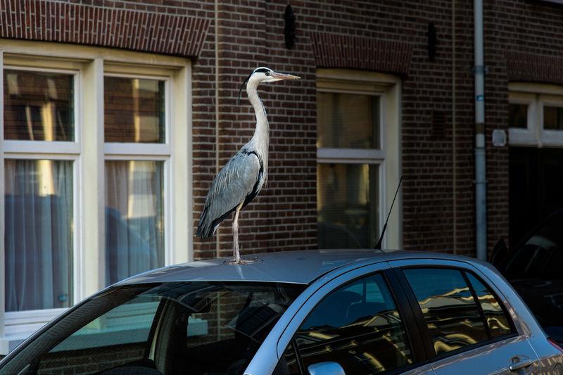 Crane on car