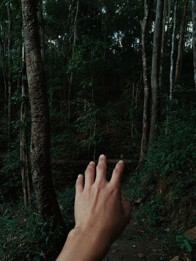 faraway My Hand  Hand Handsome Faraway In Forest Forest Trees Green Natural Human Body Part Personal Perspective One Person People Day Adult Adults Only Tree Tree Trunk Human Hand Real People Outdoors Close-up Low Section Beauty In Nature Nature