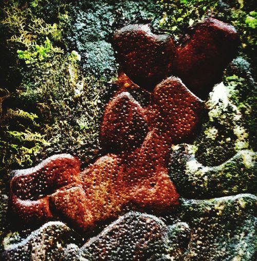 Kauri Tree Tree New Zealand