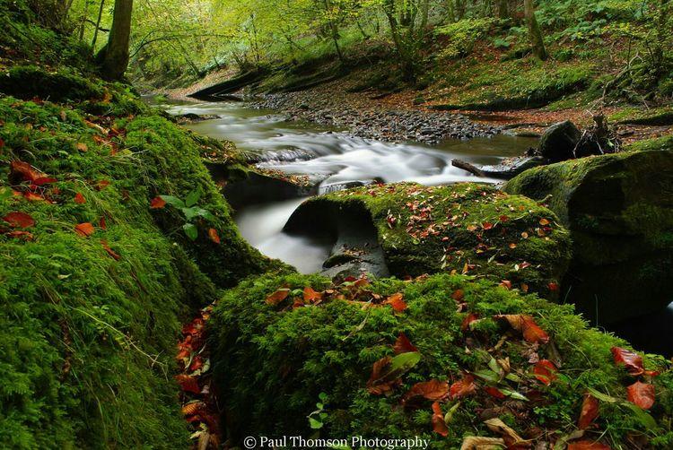 Showcase: November Brampton Autumn🍁🍁🍁 Trees Landscapes Rivers Cumbria Uk Gelt Woods Landscapes Outdoor Woods