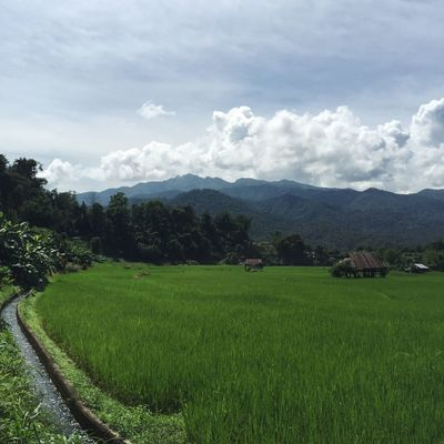 Nice cropland Agriculture Paddy Rice Field Crop Field Countryside Sky Cloud Landscape Mountain View Cottage Life Nature Nopeople Outdoors Scenics Roadtrip Thailand Wlodsimier
