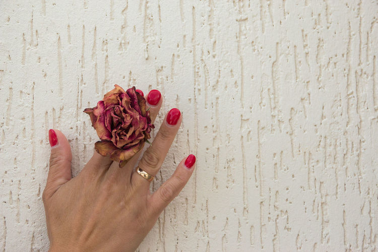 dried rose in hands Hand One Person Human Hand Human Body Part Finger Human Finger Flower Body Part Flowering Plant Wall - Building Feature Holding Nail Polish Real People Lifestyles Adult Women Personal Perspective Freshness Plant Nail