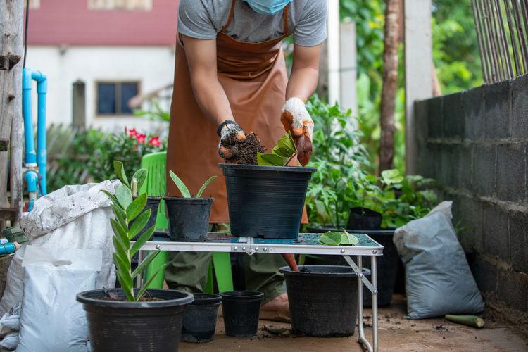 Rear view of man working on potted plant