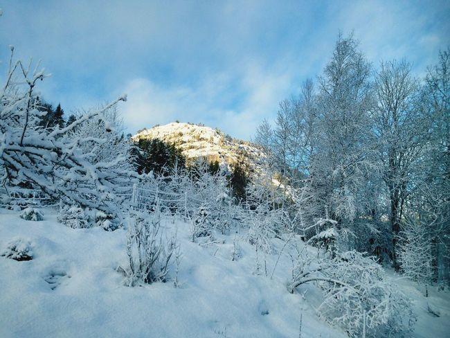 Winter Snow Nature Mountain Norway Norway🇳🇴