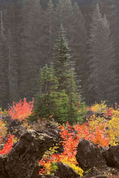 Tree Nature Forest No People Growth Outdoors Beauty In Nature Day Flower Landscape Multi Colored Scenics The Natural World PNW Yellow Oregon Nature Fall Fall Beauty Fall Colors Central Oregon Red PNWonderland Pnwnaturescapes Evergreen