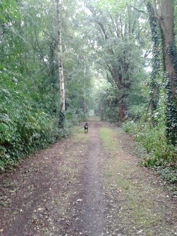 Morgendliche Hunderunde Dog Life EyeEm Dog Lover guten morgen von Unterwegsunddraußen The Places ı've Been Today aus NRW, Deutschland! !
