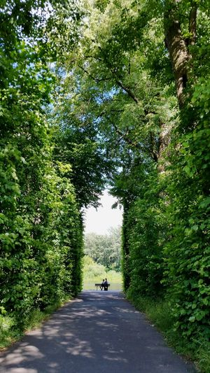 Symmetry Symetric Symetrical Couple Romantic Nature Garden Archway Couple Sitting On Bench Only Them  Romantic Garden Bench Corridor Of Trees Corridor View Natural Corridor Date Wilanow Palace Wilanow Garden Poland