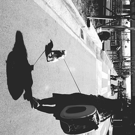 Showcase: February Shadow Walk With The Dog Walking With Dog Trip With Friends Travel With Pet Bnw Streetphotography Street Photography Streetphoto_bw Puppy Everybodystreet Black And White Snapshots Of Life Snapshot Hanging Out Trip B&w Street Photography