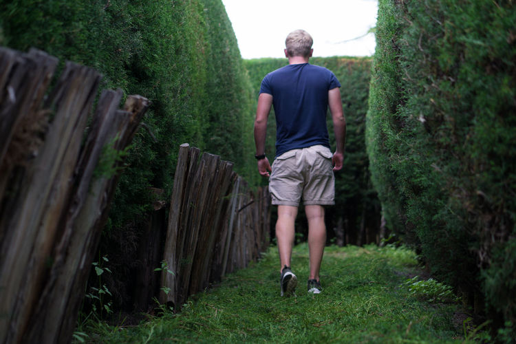 Full Length Rear View Of Man Walking Amidst Hedges