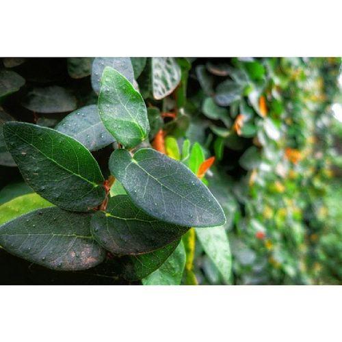 Wall creepers Green Leaves WallCreepers Closeup IGERSNairobi IGNairobi IGKenya Kenya254 Kenya365