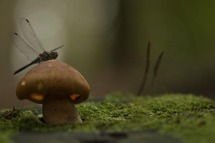 dragonfly sat