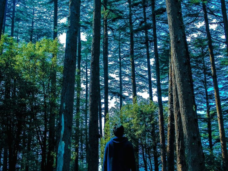 Hearing the whispers of the trees and becoming one with the nature ... Pinetrees Forest Person Lookingup Mussoorie Uttarakhand Tourism Friend Feeling Nature Trees Tadaa Community Adventure Trekking Tourist Attraction  Dhanaulti Exploring Cool Travel Photography Landscape_Collection Colors Green North India Tour Travel