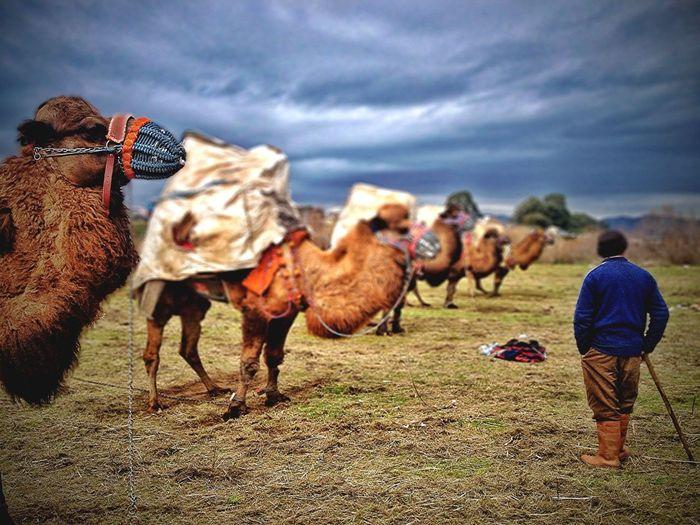 Eee gittik tabiiki deve güreşlerine