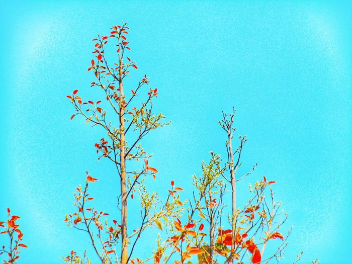 Tree Flower Clear Sky Branch Blue Sky Close-up