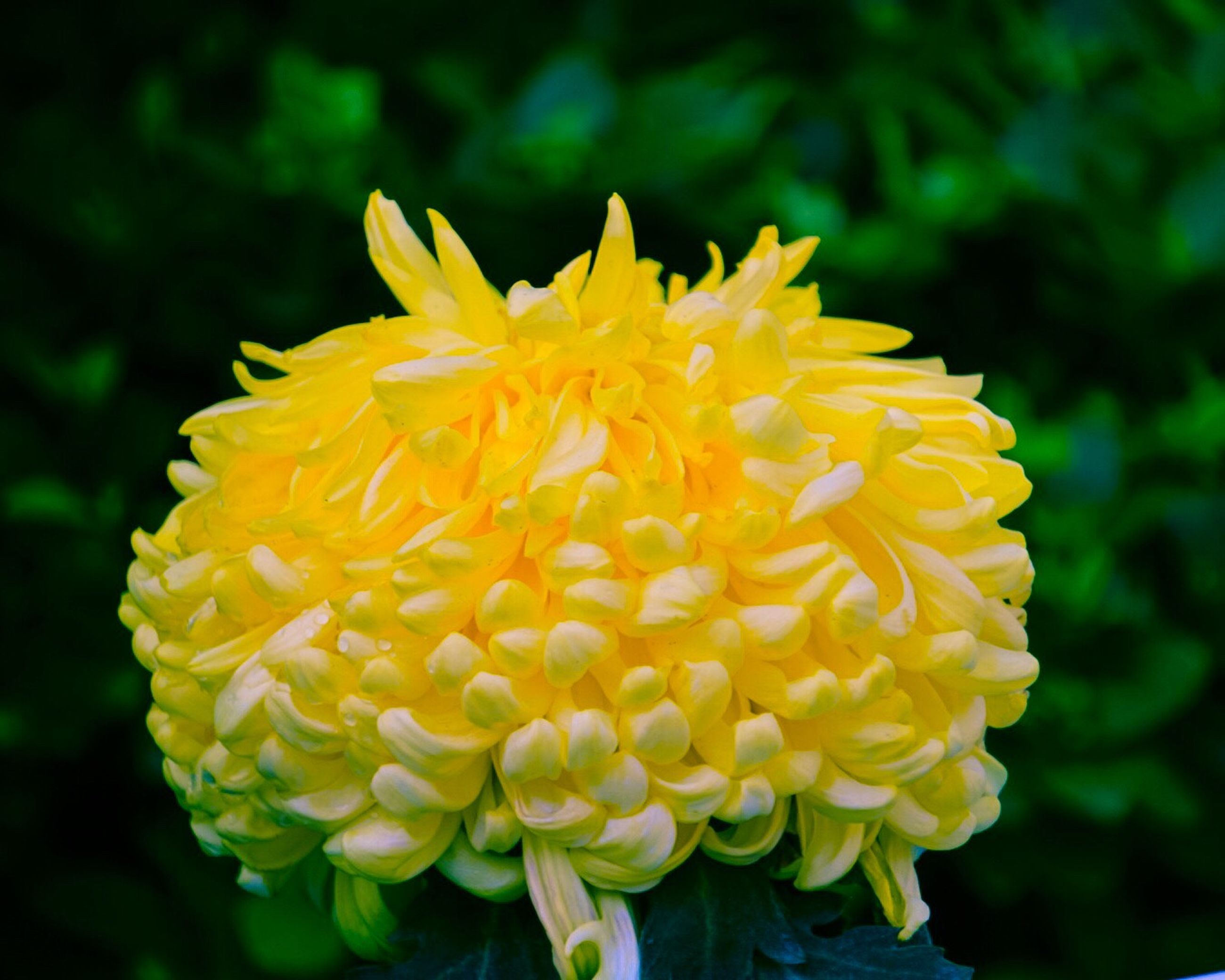 flower, yellow, beauty in nature, fragility, nature, freshness, petal, flower head, growth, plant, close-up, springtime, no people, outdoors, day
