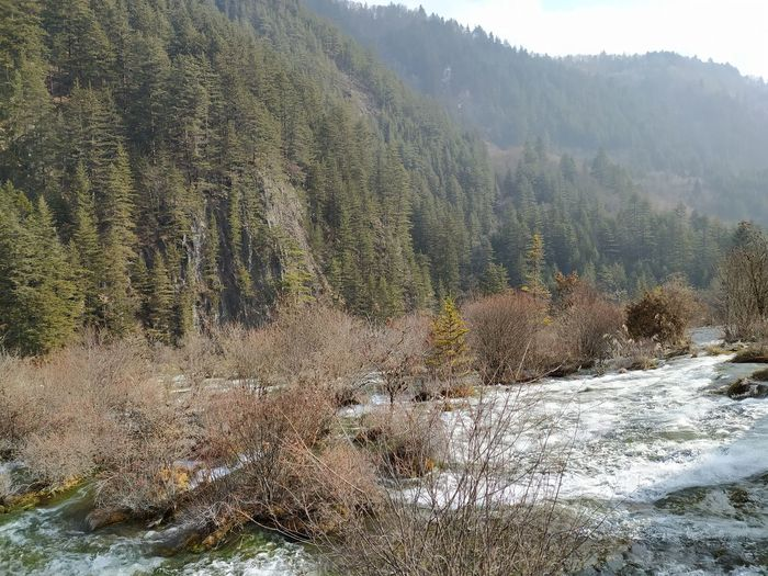 Scenic view of river flowing through forest