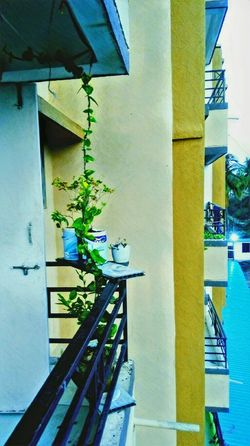 Balcony Shot Balcony Building Exterior Architecture Porticato Outdoors Plants Money Plant