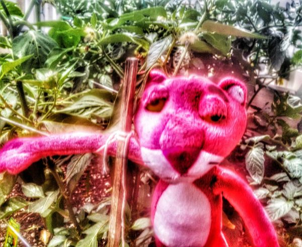 Pink eith a hangover Enjoying Life Special Effects Share A Photograph Pink's On A Journey Pink Panther On The Road Pink Panther In A Garden Journey Of Life Life Is A Journey
