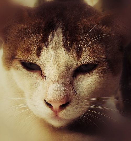 Introspection Animal Themes Pets Close-up Animal Head  Domestic Animals Feline Cat Portrait Whisker Animal Eye Nature No People Domestic Cat Day Mammal