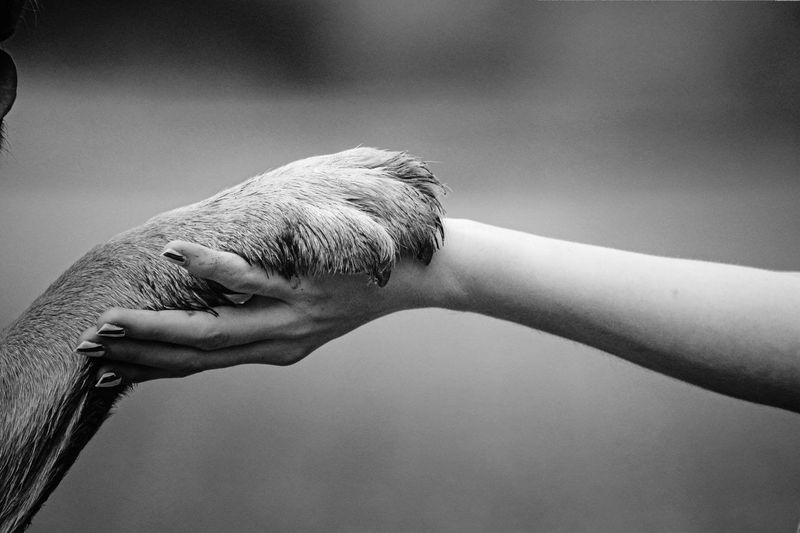 Cropped image of woman and dog holding hands outdoors