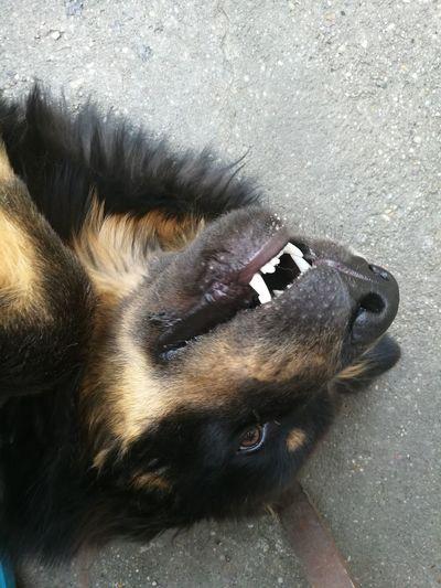 Keep Calm And Always Smile Tibetan Mastiff First Eyeem Photo