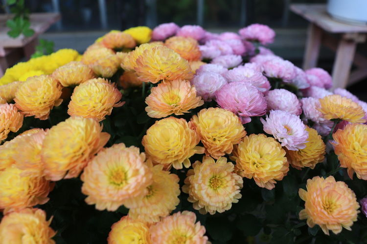 Close-up of fresh yellow flowers in market