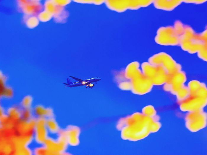 桜 飛行機 新木場 桜の雲を進む