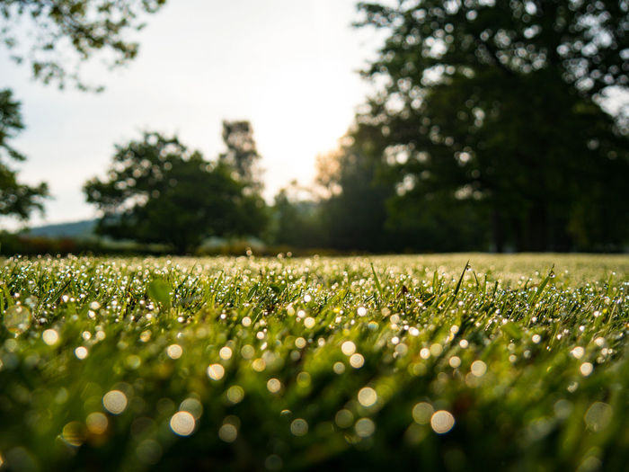 Close-up of grass against trees and sky