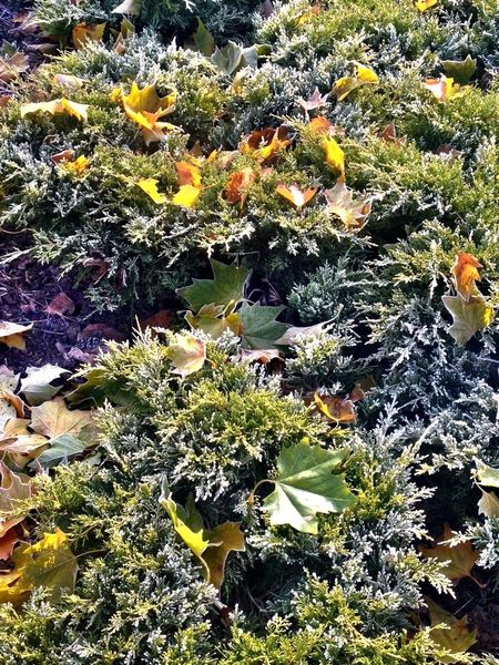 Nature autumn leafs Growth Nature Plant Beauty In Nature Outdoors No People High Angle View Sunlight Day Flower Green Color Freshness Leaf Close-up Water Fragility