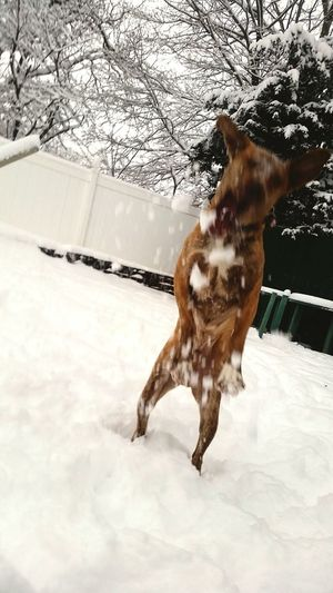 In Action My Dogs Are Cooler Than Your Kids My Dog Pets Pet Photography  Dogs Winter Winter Wonderland On The Move Animals