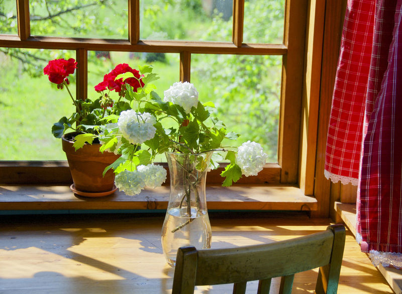 Window Table Indoors  Home Interior Day Vase Flower Home Showcase Interior Furniture Plant No People Modern Nature Orchid Close-up Wood - Material Cantry Cantryside Red End White Beauty In Nature Plant Nature Indoors  Freshness
