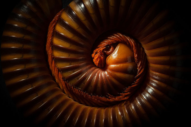 Full frame shot of spiral