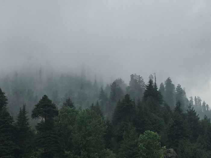 Best place to be is somewhere else Tree Plant Fog Beauty In Nature Scenics - Nature Growth Tranquility Land Tranquil Scene Forest Sky Nature Green Color Outdoors WoodLand Environment Day Non-urban Scene