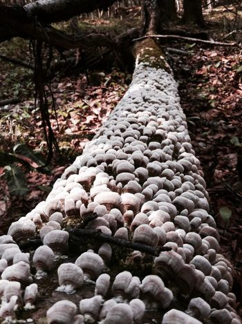 Mushrooms Tree Forest Dead Tree