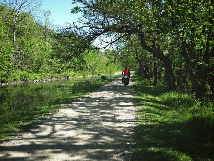 Rear view of person riding motorcycle on footpath amidst trees in forest