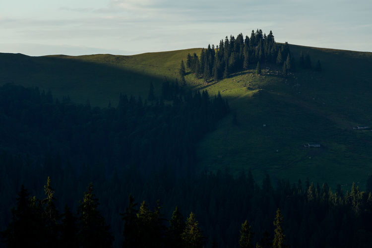 Scenic view of trees on mountain against sky in rodnei mountains