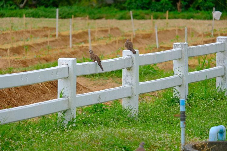 Fence on field