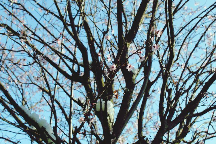 Selvatic tree Tree Flower Branch Springtime Blossom Sky Flower Tree Fruit Tree In Bloom Botany Plant Life Blooming Pink