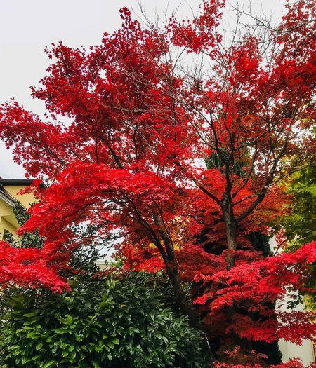 Autumn Contrast