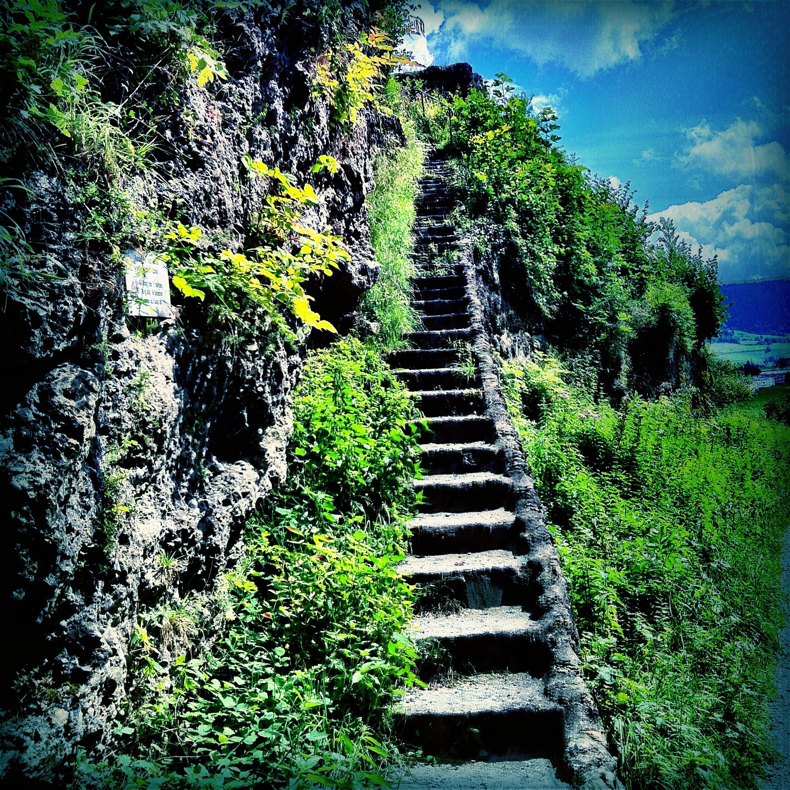 steps, plant, growth, tree, steps and staircases, the way forward, staircase, built structure, green color, nature, sky, tranquility, architecture, day, beauty in nature, tranquil scene, no people, outdoors, leading, rock - object