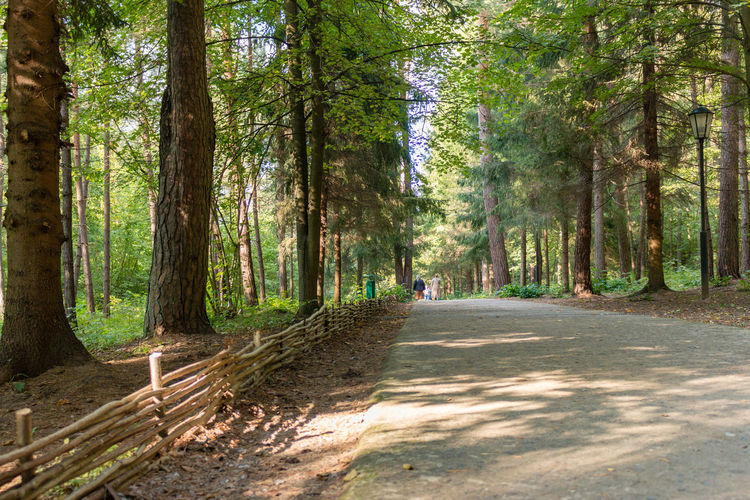 Footpath in the forest, Russia, Polenovo Footpath Pine Russia Russia. Polenovo Tula Oblast Beauty In Nature Day Forest Landscape Museum Nature No People Outdoors Pathway Polenovo Road Scenics Strakhovo The Way Forward Tranquil Scene Tranquility Tree