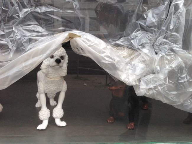 Dog Puppet Sculpture Behind Window Under Plastic White