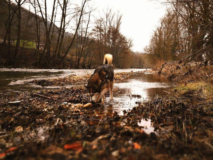 Nature Husky Husky ♡ Huskyphotography Dog